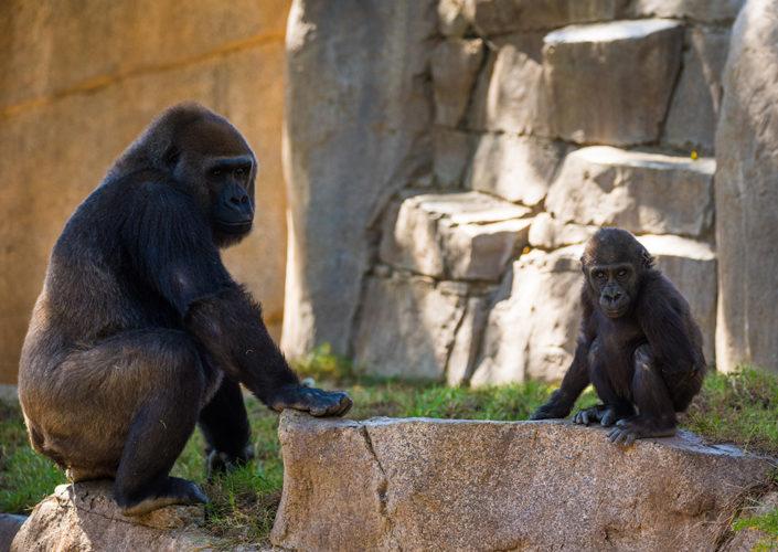 safari-park-san-diego-zoo-southern-california-792