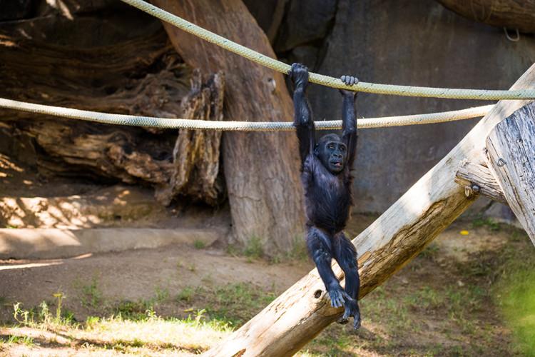 safari-park-san-diego-zoo-southern-california-793