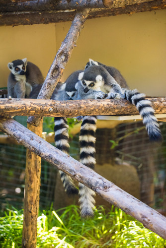 safari-park-san-diego-zoo-southern-california-795