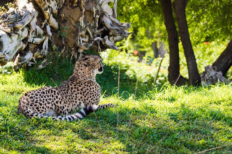safari-park-san-diego-zoo-southern-california-797