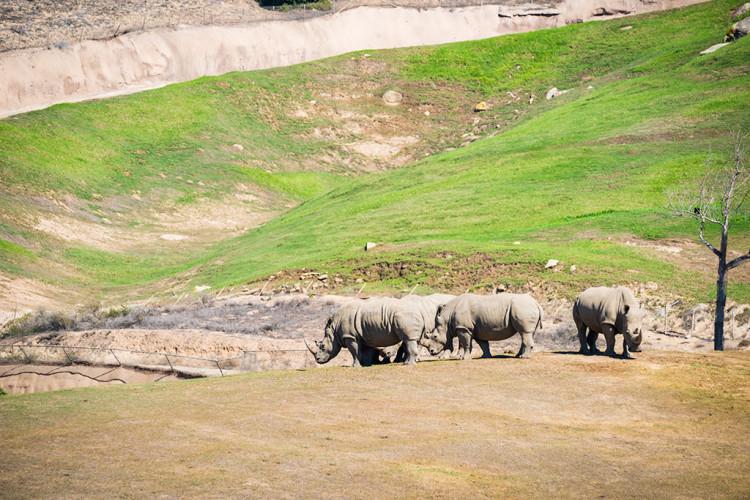 safari-park-san-diego-zoo-southern-california-799