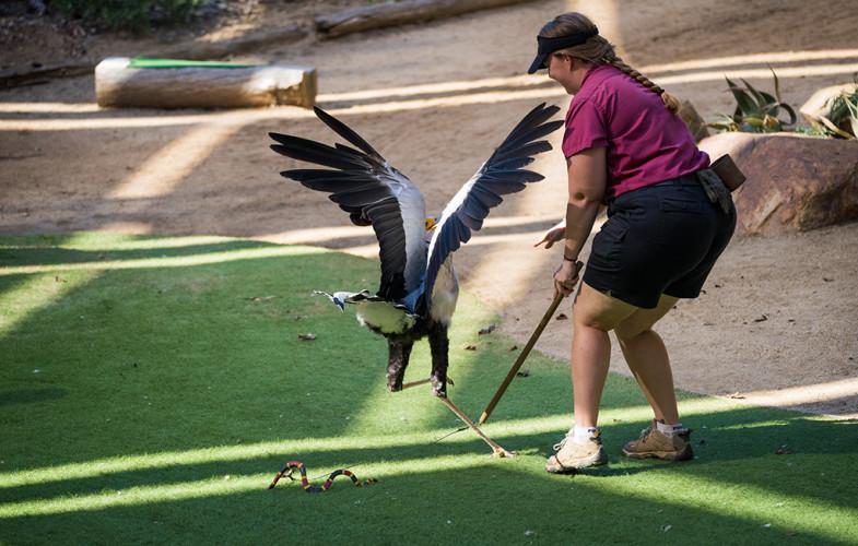 safari-park-san-diego-zoo-southern-california-805