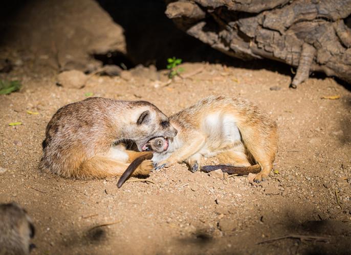 safari-park-san-diego-zoo-southern-california-807