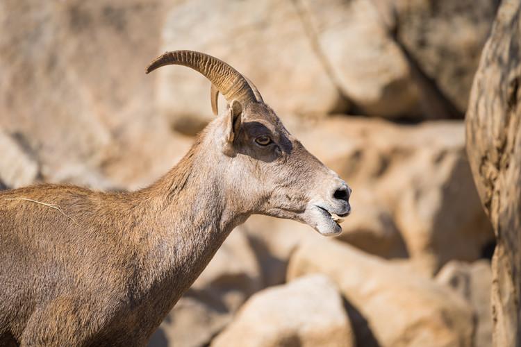 safari-park-san-diego-zoo-southern-california-810