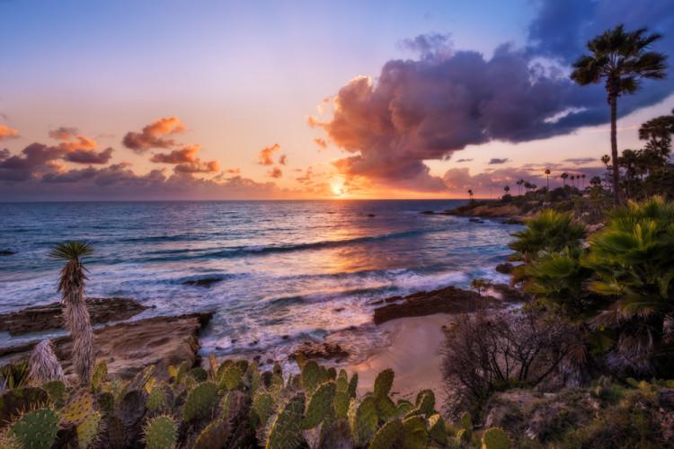 heisler-park-landscape-cactus-laguna-beach-sunset-california-2