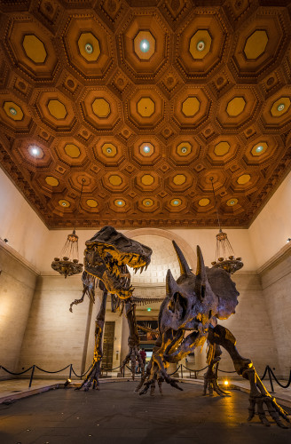 natural-history-museum-los-angeles-county-california-065