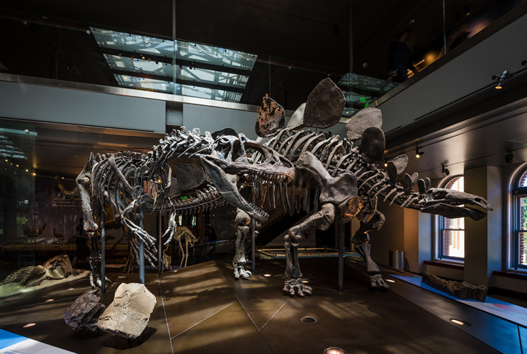 natural-history-museum-los-angeles-county-dinosaur-hall-059