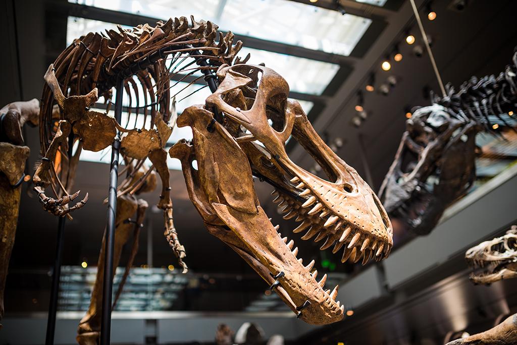 Natural History Museum Los Angeles County Dinosaur Hall