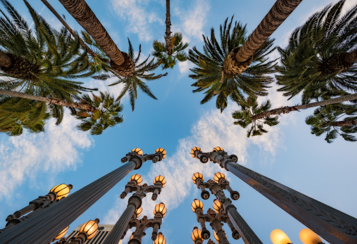 urban-lights-palm-trees-lacma-los-angeles-county-art-museum-california