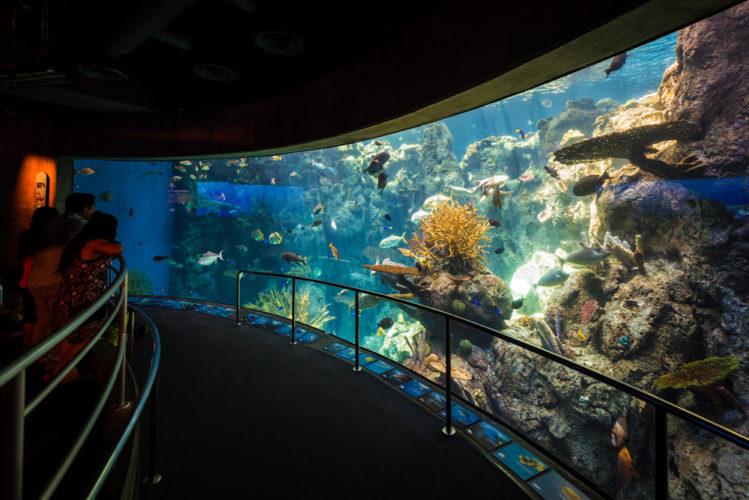 Aquarium Of The Pacific Review Tips Travel Caffeine