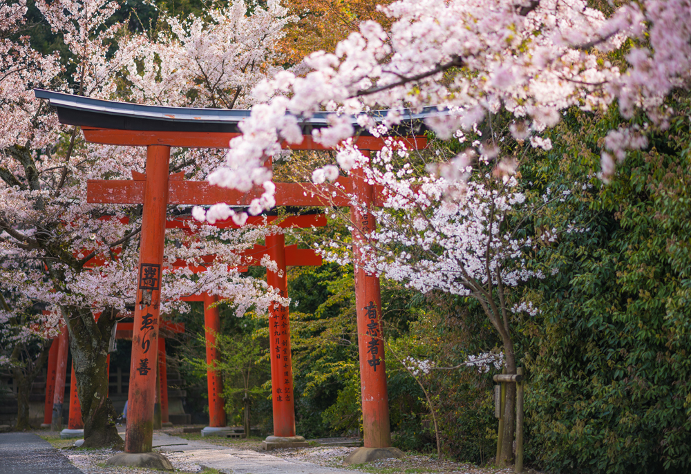 Between Our Own First Time Experience And Feedback We Hear From Others Know That The Average Visit To Kyoto Is 2 3 Days Most People View As