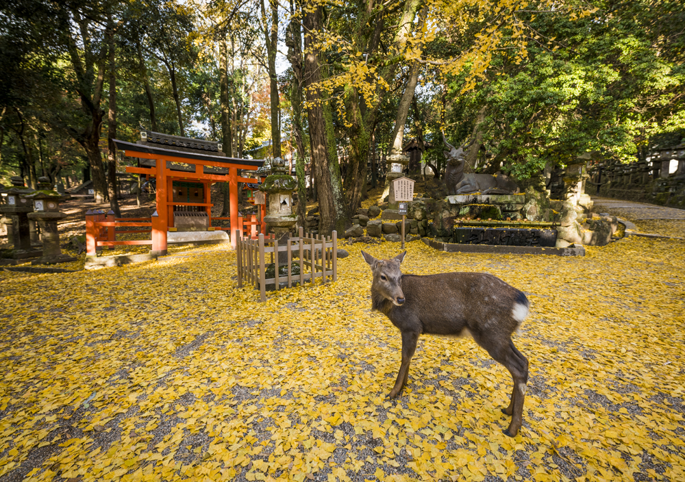 7c78d32efe8f Our Japan itineraries provide 1-day plans for every area of Kyoto