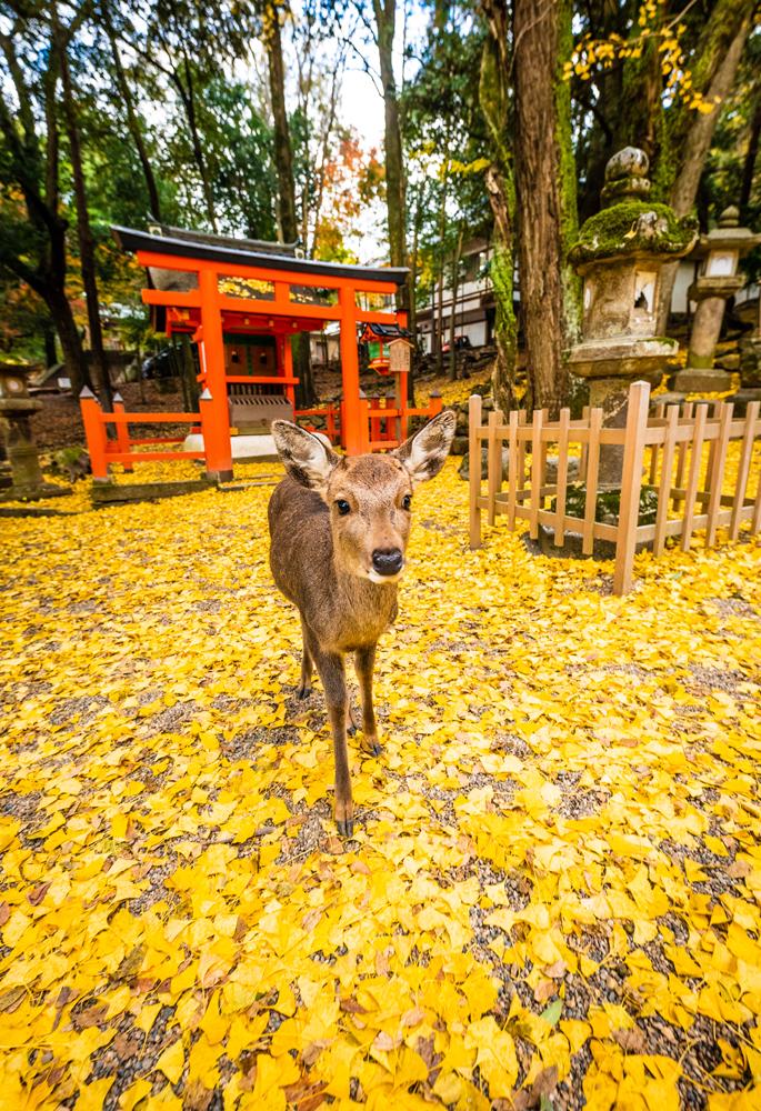 1-Day Nara, Japan Itinerary - Travel Caffeine